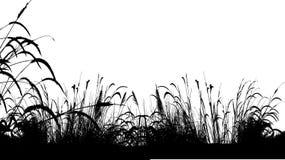 Fondo della siluetta dell'erba Fotografia Stock Libera da Diritti