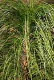 Fondo della spazzola dell'erba dell'ornamento Fotografie Stock