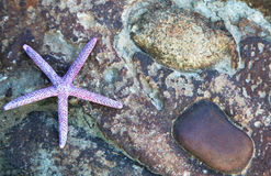 Fondo della stella di mare Immagini Stock Libere da Diritti