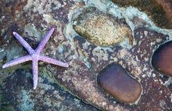Fondo della stella di mare Fotografie Stock Libere da Diritti