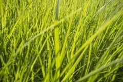 Fondo della superficie dell'erba verde fotografie stock libere da diritti