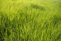 Fondo della superficie dell'erba verde fotografie stock