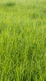 Fondo della superficie dell'erba verde fotografia stock