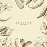 Fondo della verdura fresca Immagini Stock