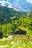 Fondo delle alpi fotografia stock libera da diritti