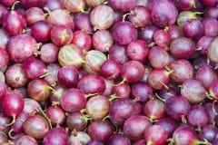 Fondo delle bacche dell'uva spina fotografia stock