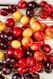 Fondo delle ciliege succose mature Immagini Stock