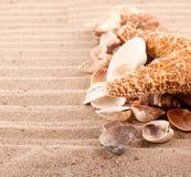 Fondo delle conchiglie e delle stelle marine Fotografia Stock