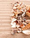 Fondo delle conchiglie e delle stelle marine Immagini Stock