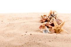 Fondo delle conchiglie e delle stelle marine Immagini Stock Libere da Diritti