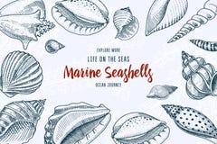 Fondo delle conchiglie o forme differenti dei molluschi Creatura del mare inciso disegnato a mano nel vecchio schizzo, stile d'an royalty illustrazione gratis