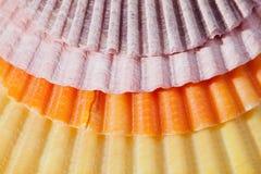 Fondo delle conchiglie variopinte macro Fotografie Stock Libere da Diritti