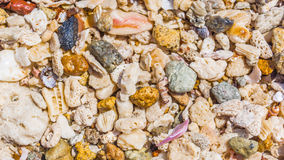 Fondo delle coperture e dei coralli Immagine Stock Libera da Diritti