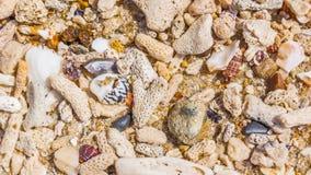 Fondo delle coperture e dei coralli Fotografia Stock Libera da Diritti