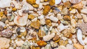 Fondo delle coperture e dei coralli Fotografia Stock