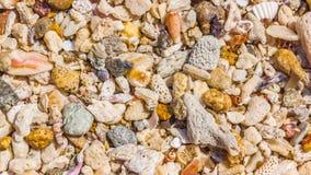 Fondo delle coperture e dei coralli Immagine Stock