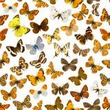 Fondo delle farfalle Fotografia Stock