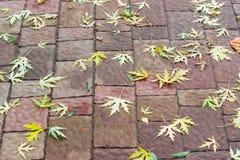 Fondo delle foglie di acero cadute su un sentiero per pedoni Fotografia Stock Libera da Diritti
