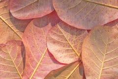 Fondo delle foglie di autunno Fotografia Stock Libera da Diritti