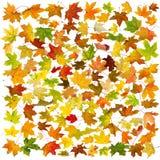 Fondo delle foglie di autunno Immagini Stock