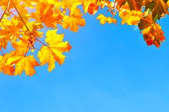 Fondo delle foglie di autunno con spazio per testo - foglie di acero arancio variopinte di autunno sui precedenti di cielo blu Fotografie Stock Libere da Diritti