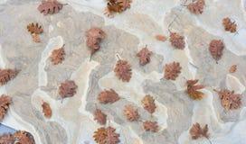 Fondo delle foglie di autunno della quercia sulla pietra Fotografie Stock Libere da Diritti
