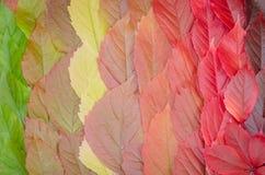 Fondo delle foglie di autunno, un tappeto delle foglie Immagini Stock Libere da Diritti