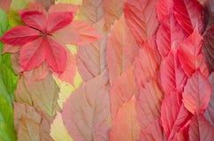 Fondo delle foglie di autunno, un tappeto delle foglie Immagini Stock