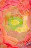 Fondo delle foglie di autunno, un tappeto delle foglie Fotografie Stock