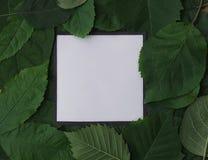 Fondo delle foglie verdi con una carta Immagine Stock