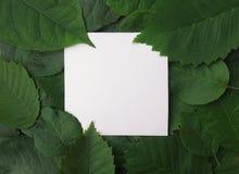 Fondo delle foglie verdi con una carta Fotografia Stock Libera da Diritti