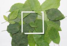 Fondo delle foglie verdi con una carta Immagini Stock