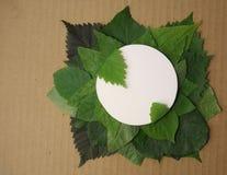 Fondo delle foglie verdi con una carta Immagine Stock Libera da Diritti