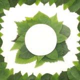 Fondo delle foglie verdi con una carta Immagini Stock Libere da Diritti