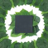 Fondo delle foglie verdi con una carta Fotografie Stock Libere da Diritti