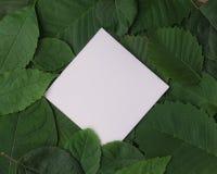 Fondo delle foglie verdi con una carta Fotografie Stock