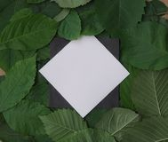 Fondo delle foglie verdi con una carta Fotografia Stock