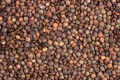 Fondo delle lenticchie francesi secche Fotografie Stock Libere da Diritti