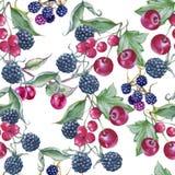 Fondo delle more, delle ciliege e dell'uva passa Reticolo senza giunte Fotografia Stock Libera da Diritti