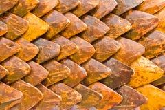 Fondo delle noci di cocco Fotografia Stock Libera da Diritti