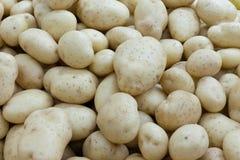 Fondo delle patate fotografia stock libera da diritti