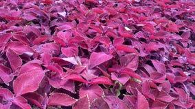 Fondo delle piante con i fiori variopinti fotografia stock