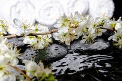 Fondo delle pietre di zen, prugna di fioritura del ramoscello, asciugamani bianchi w della stazione termale Fotografie Stock
