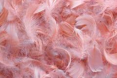 Fondo delle piume rosa Immagine Stock