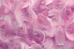 Fondo delle piume rosa Fotografie Stock Libere da Diritti