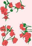 Fondo delle rose Fotografie Stock Libere da Diritti