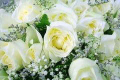 Fondo delle rose bianche, bello fondo del fiore immagine stock libera da diritti