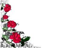 Fondo delle rose del gelsomino Fotografia Stock