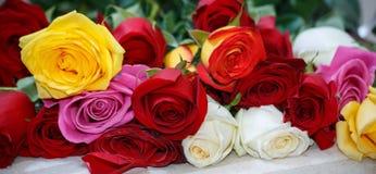 Fondo delle rose di colore Fotografie Stock Libere da Diritti
