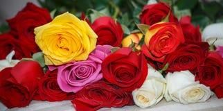 Fondo delle rose di colore Immagine Stock Libera da Diritti